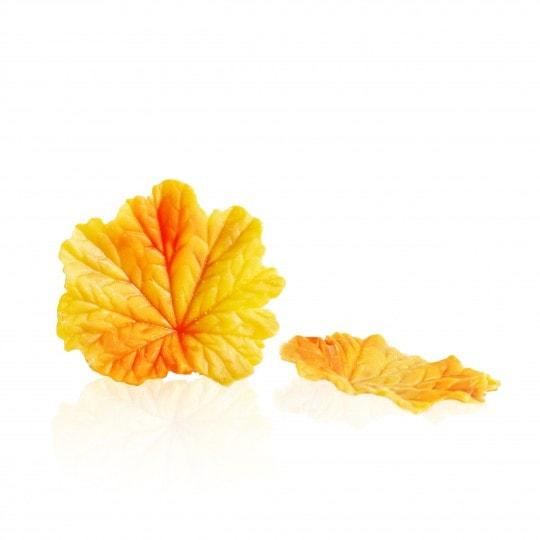 Fall leaf yellow